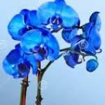 Orchidee Profile Picture